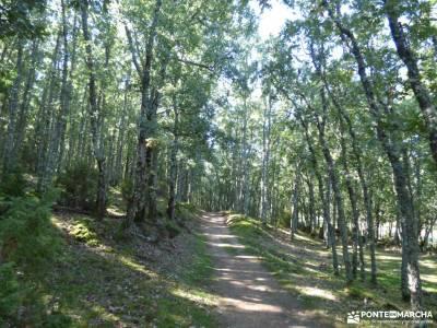 Vuelta al Senderismo-Valle Lozoya; vacaciones en junio fotos baqueira beret madera tejo ruta montaña